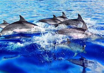 Dolphin Watch with Buffet from Palma de Mallorca
