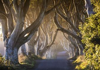 Full-Day Trip to Games of Thrones with 48hrs Belfast Hop-on Hop-off City Sightseeing Tour