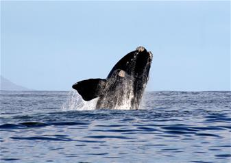 Reykjavik Grand Excursion and Whale Watching Experience