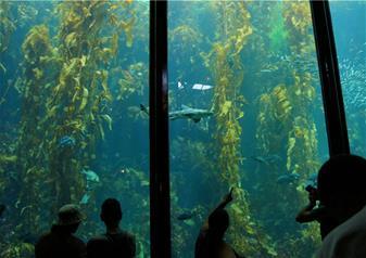 Monterey and Caramel Tour including Monterey Bay Aquarium
