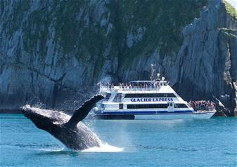 3.5 Hours Kenai Fjords Wildlife Cruise Tour from Seward