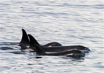 5 Hours Kenai Fjords Wildlife Cruise Tour with Alaska Salmon and Prime Rib Buffet