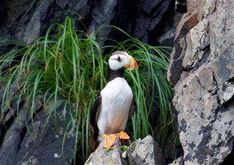 6 Hours Kenai Fjords National Park Cruise Tour with Alaska Salmon and Prime Rib Buffet