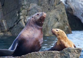 7.5 Hours Kenai Fjords National Park Cruise Tour with Alaska Salmon and Prime Rib Buffet