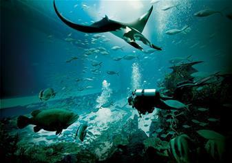 S.E.A Aquarium ™ and Universal Studio Tour with Transfers from Singapore